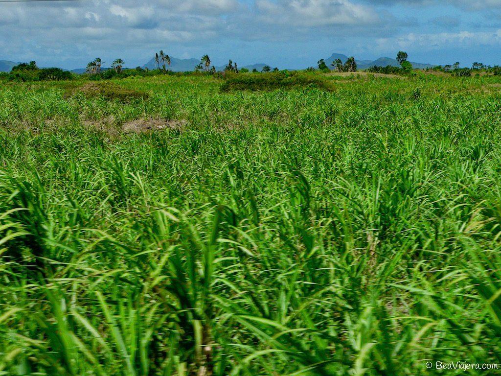 Isla Mauricio: belleza salvaje en el Indico