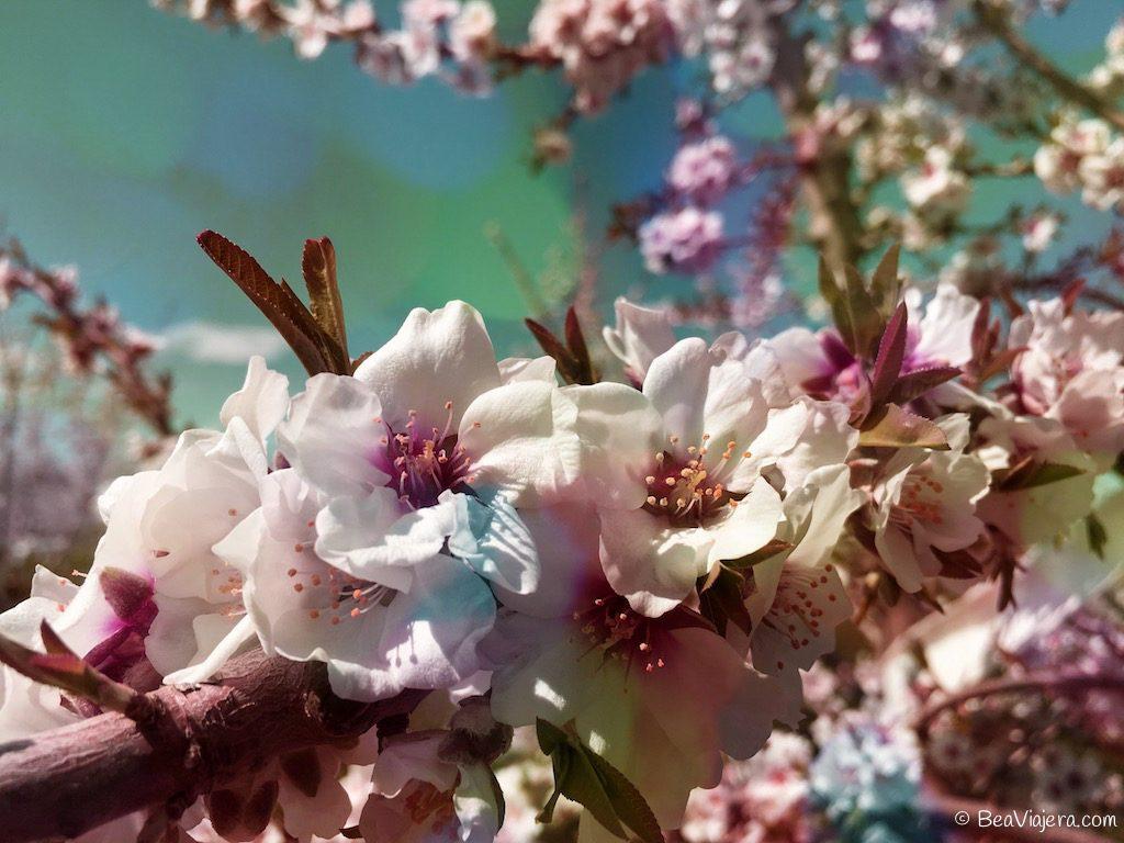 Sonríe, ya es primavera