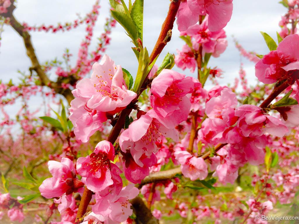 Aitona campos de color rosa