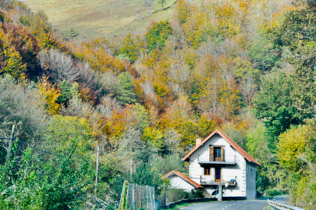 Selva de Irati el segundo hayedo más grande de Europa