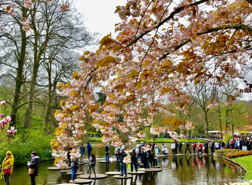 El jardín de tulipanes más grande del mundo está en Holanda